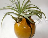 Bud Vase in Stoneware Yellow Ochre and Green Sculptural Vessel for Air Plant or Miniature Bouquet
