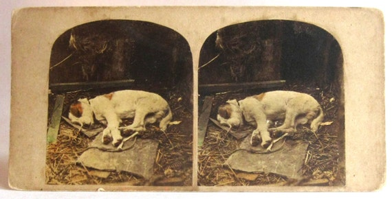 Post Mortem Old Terrier Dog Hand Tinted Real Photo Stereoview