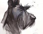 Scottish Terrier portrait original watercolour painting