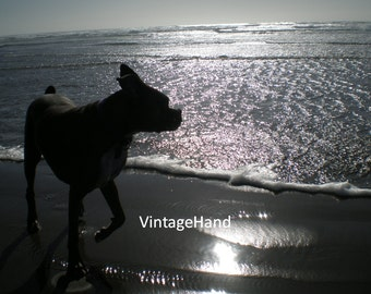 Windy Day Dog Digital download / Ears flapping / Sunny coastline / Sea / Beach / Spring / Summer / Photograph / Art download / Home Decor
