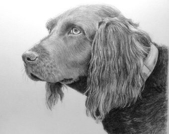 Custom Dog Pet Portrait Pencil 8x10