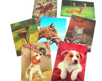Vintage Animal Postcard Collection