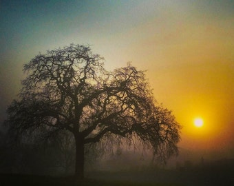 """Foggy Oak 20"""" x 30"""" - digital photo printed on canvas"""