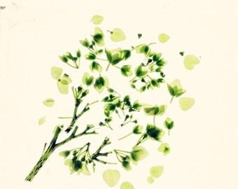 "Botanical Print, Botanical Art, Green Leaves, Green Print, Floral Print - ""Hugging Leaves"" Botanical Prints"