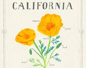 California State Flower Print, The Golden Poppy