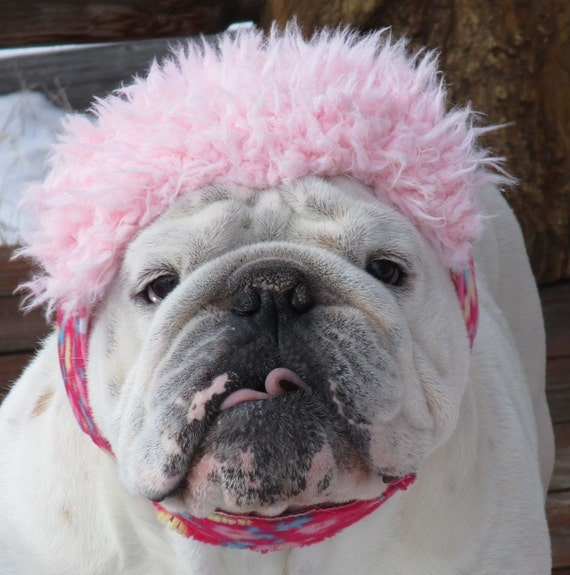 Order ENGLISH BULLDOG Pink Flowers GIRLY Faux fur on brim, reversible