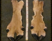 Pair Tanned Deer Leg Skins light brown with white edges have Fur and Hooves 3.75 in x 9.25  crafts  taxidermy leather work HP-1