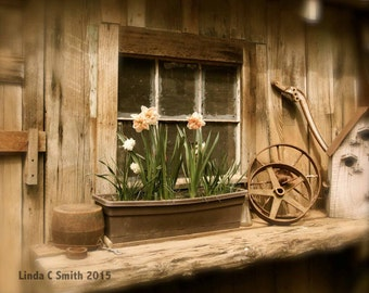 Rustic Windowbox Art Photo - Flower Windowbox Prints - Daffodils Photography - DIY Country Print