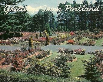 Vintage Greetings From Portland Oregon Postcard  Rose Gardens