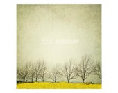 Vintage Landscape photography. Mustard field. winter trees. gray sky. yellow and gray art.branches. minimalist decor. branches.