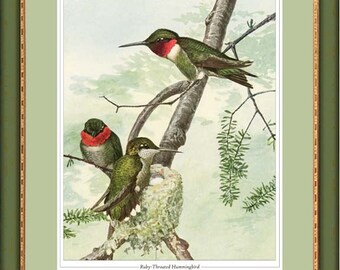 Ruby-Throated Hummingbird antique bird print reproduction