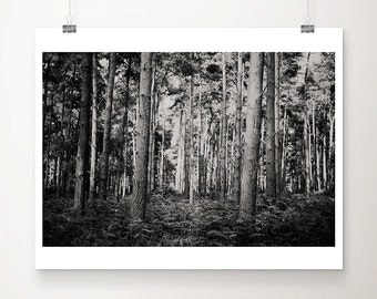 woodland photograph black and white photography tree photograph rustic decor woodland decor nature photography forest photograph