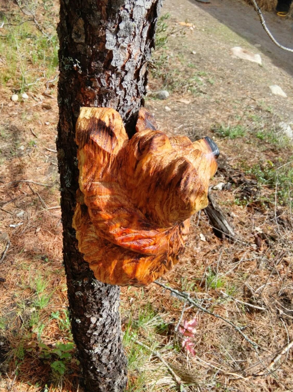 Climbing bear carving chainsaw by woodlotartisans