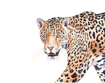 Jaguar print of watercolor painting -J3115- A4 size medium print