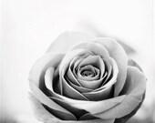"Black and White Rose Print - grey flower photography gray light nature wall art pale modern artwork botanical photo, ""My Perfect Rose"""