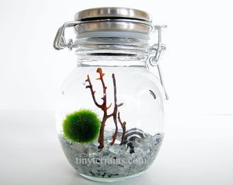 Marimo Terrarium: Marimo Moss Ball Small Stainless Steel Jar Aquarium, several colors available