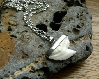 Shark Tooth Pendant, Creamy Colored Shark Tooth, Sterling Silver Chain, Genuine Shark Tooth, Unisex Beach Jewelry, Natural Shark Tooth