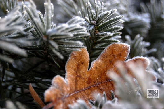 Autumn photograph, dry leaf, snow crystals, nature photograph, First frost, Frosty leaf, Fall home decor, Thanksgiving present