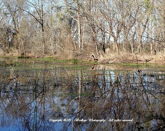 Why I Love Lock & Dam Park  - New Savannah Bluff, Augusta, Georgia