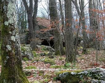 Bear Heaven - West Virginia