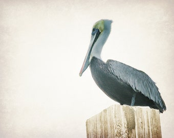 Nautical Wall Art Decor | Nature Photography | Pelican Art | Nature Art Print | Rustic Nautical Prints | Beach House Decor Artwork | Seabird