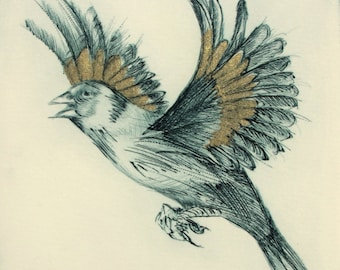 Goldfinch. Fine art limited edition drypoint.