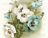 Blue and White Pansies Catherine Klein Vintage Flowers Printable Clip Art Digital Download JPG Image