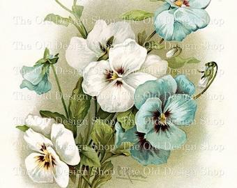 Blue and White Pansies Catherine Klein Vintage Flowers Printable Clip Art Digital Download JPG Image