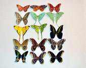 Butterfly Moth Magnets Set of 15 Insects Multi-Color Insects artist Doug Walpus