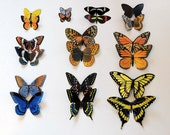 Butterfly Magnets Hand Painted Both Sides Insects Set of 10 Multi Color Refrigerator Magnets Home Decor Gifts by artist Doug Walpus