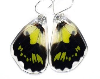 Real Green Malachite Butterfly (Graphium tyndereus) (bottom/rear wings) earrings
