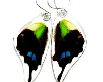 Real Butterfly Purple Spotted Swallowtail (Graphium weiskei) (bottom/rear wings) earrings