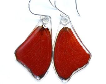 Butterfly Earrings, Real Red Glider Butterfly (Cymothoe sangaris) (top/fore wings) earrings