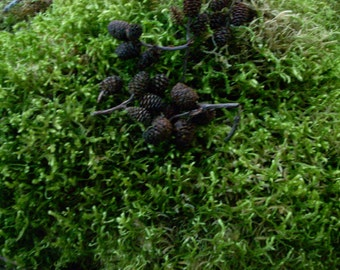 Natural Northwestern Oregon Moss/lichen lime green