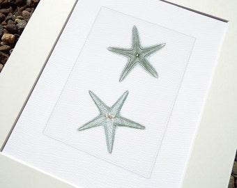 Sea Foam Blue Starfish Sea Life Archival Print