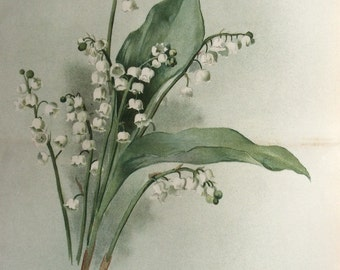 RARE Antique Botanical 1880s Print Color Lithograph LILY Of The Valley Flower Floral 1884 Horticulture Gardening
