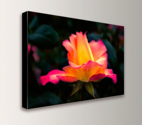 """Pink and Yellow Rose - Flower Art - Rose Photography - Canvas Print - Modern Wall Decor - """" Pink Rose """""""