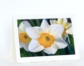 White Daffodils Cards, Jonquils Cards, Blank Photo Greeting Cards, Spring Flower Cards, Nature Photography Cards