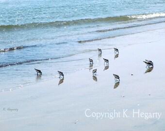 WINTER SALE 30% OFF - Photograph Ocean - Sandpipers