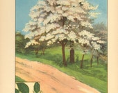 Vintage Bookplate of Trees, Tulip Tree and Flowering Dogwood Tree Nature Print from 1926, 9x6 Tennessee and Missouri State Tree