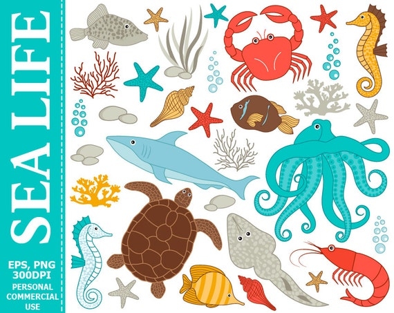 Digital Sea Life Clipart Fish Crab Octopus Sea Turtle