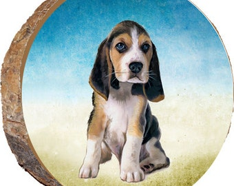 Beagle Puppy - DAD013