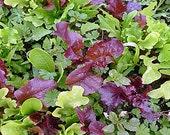 Gourmet Mixed Greens Mesclun Mix Heirloom Seeds Non GMO