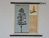 Small Original German Pull Down School Chart. Fir Tree. Mid Century Botanical Print. Germany.