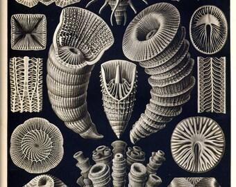 Botanical decor, Nature decor, Nature illustration, Botanical, Nature print, Botanical art, Nature life, 29