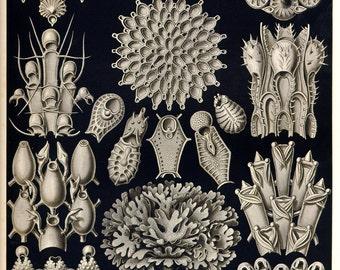 Botanical, Nature print, Botanical art, Nature life, Botanical decor, Nature decor, Nature illustration, 33