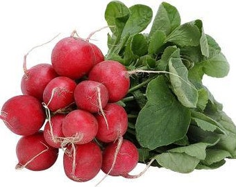 Heirloom Champion Radish, Bright Red and Crisp, Large Tops, Easy to Grow, 25 Seeds