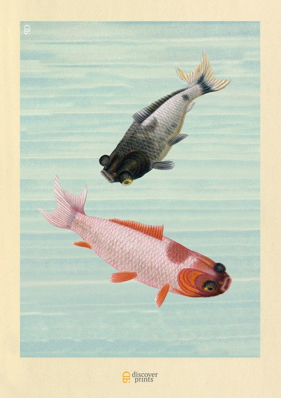 Koi goldfish archival print orange grey by discoverprints for Grey koi fish