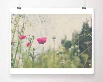 pink poppy photograph pink flower photograph nature photography english garden photograph pink poppy print fuchsia pink decor