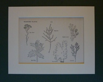 1950s Vintage Natural History Print of Seashore Plants - Vintage Botanical Print - Seaside Art - Beach Decor - Nature Decor - Coastal Art